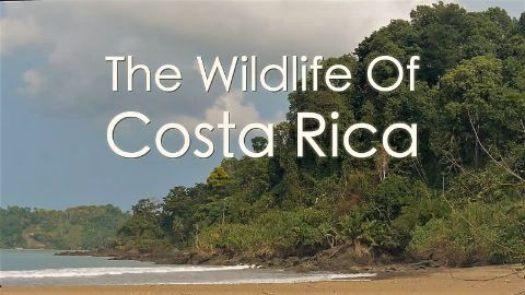 Costa Rica: Wildlife under the Rainbow