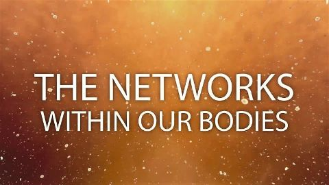 The Networks Within Our Bodies