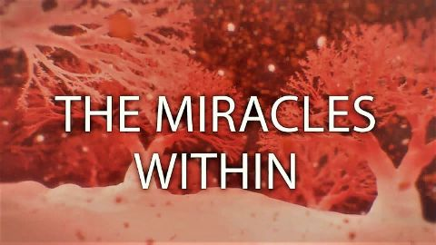 The Miracles Within