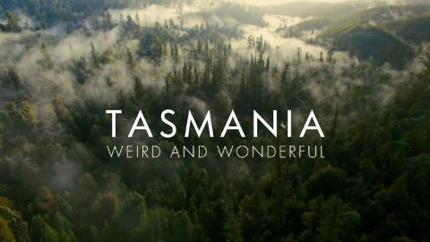 Tasmania: Weird and Wonderful