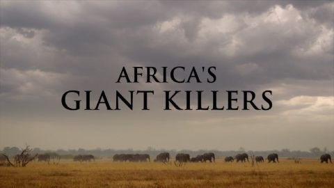 Africa's Giant Killers