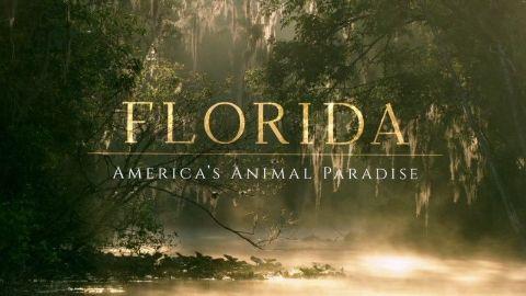 Florida: America's Animal Paradise