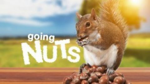 Going Nuts: Tales from Squirrel World