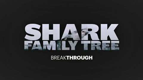 Shark Family Tree