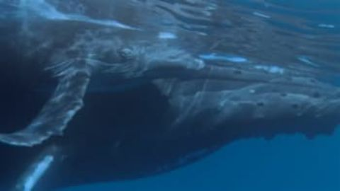 Held Hostage by a Humpback