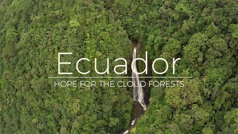 Ecuador: Hope for the Cloud Forests
