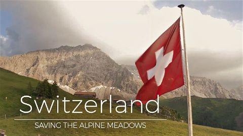 Switzerland: Saving the Alpine Meadows