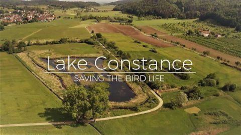 Germany: Lake Constance Saving the Bird Life