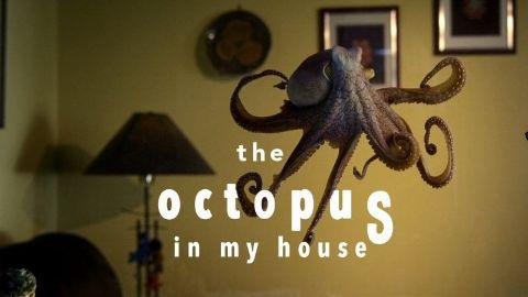 The Octopus in My House