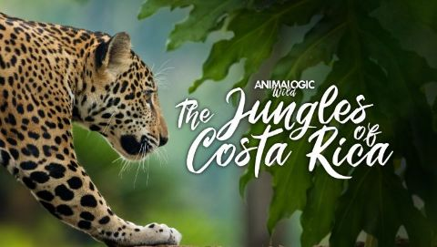 Animalogic Wild: The Jungles of Costa Rica