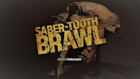 Saber-Tooth Brawl