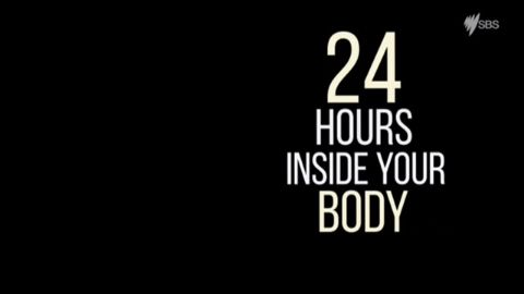 24 Hours: Inside Your Body