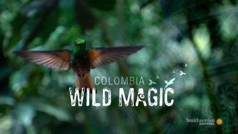 Colombia: Wild Magic