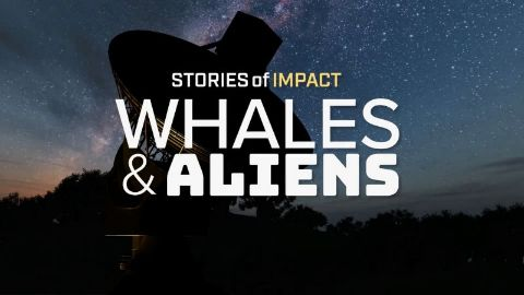 Whales and Aliens