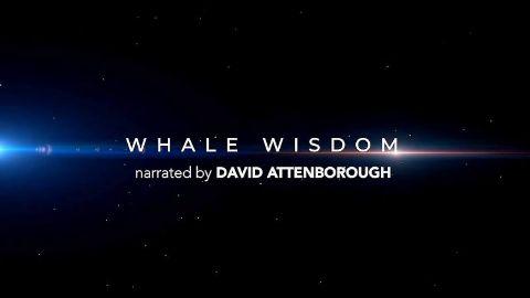 Whale Wisdom