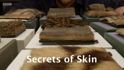 Secrets of Skin