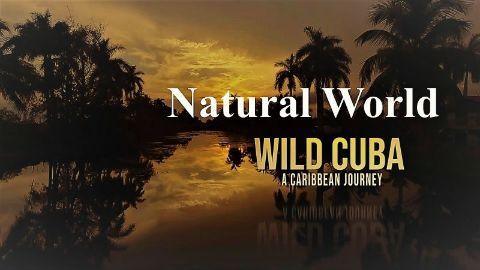 Wild Cuba a Caribbean Journey Part 1