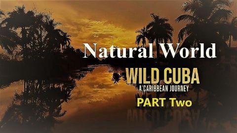 Wild Cuba a Caribbean Journey Part 2