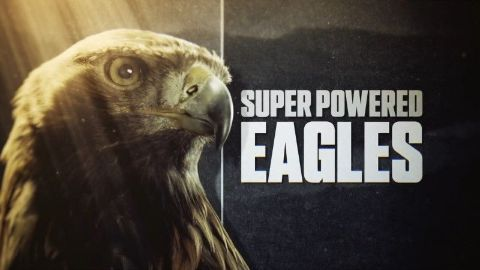 Super Powered Eagles