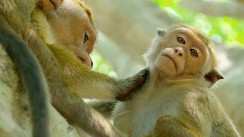 A Life Among Monkeys