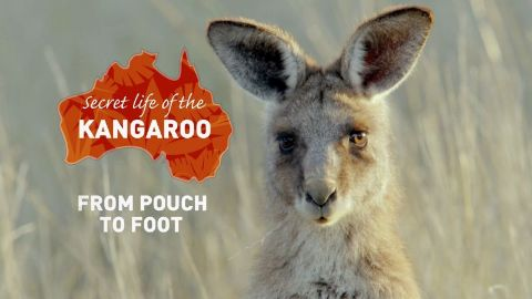 From Pouch to Foot