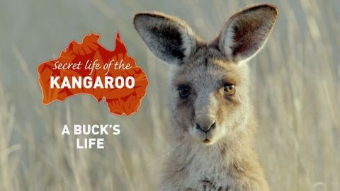 A Buck's Life