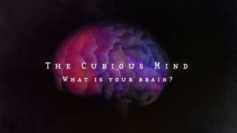 What is your Brain?