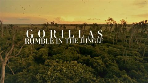 Gorillas: Rumble in the Jungle