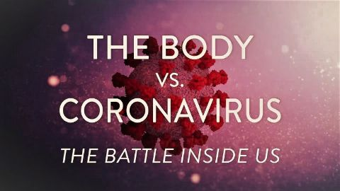 The Body Vs. Coronavirus