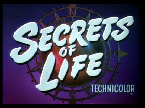Secrets of Life (Walt Disney)