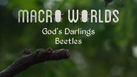 God's Darlings Beetles