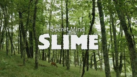 The Secret Mind of Slime