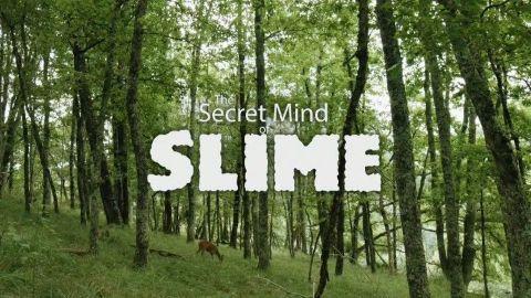 The Secret Mind of Slime