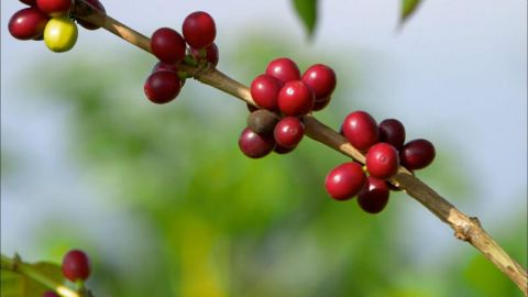 Coffee The Drink That Changed America