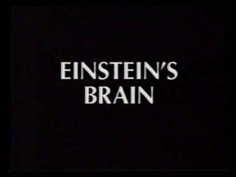 Relics: Einstein's Brain