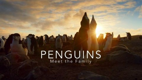 Penguins: Meet the Family