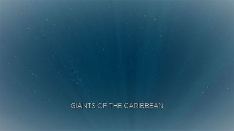 Giants of the Caribbean