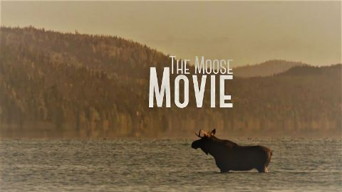 The Moose Movie