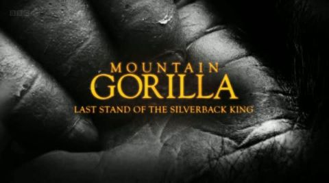 Last Stand of the Silverback King