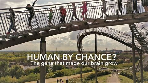 Human by Chance?