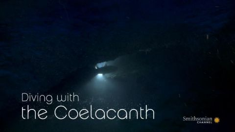 Diving with the Coelacanth