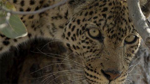 Leopard's Rock