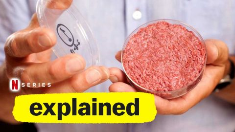 The Future of Meat