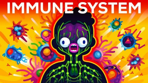 How The Immune System ACTUALLY Works