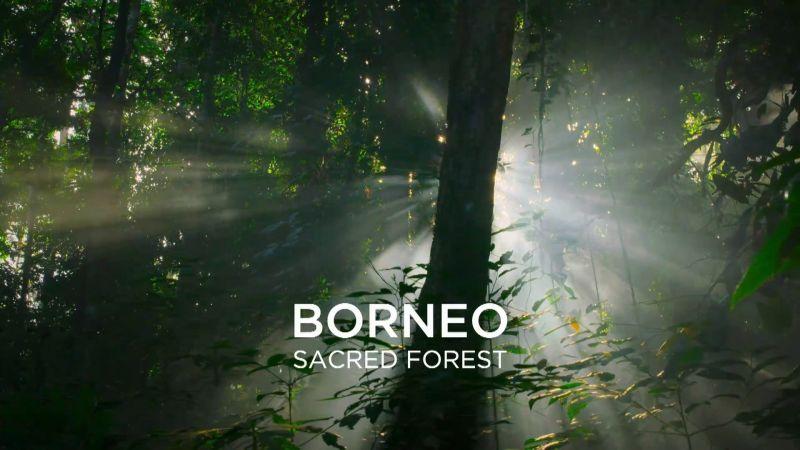 Borneo Sacred Forest