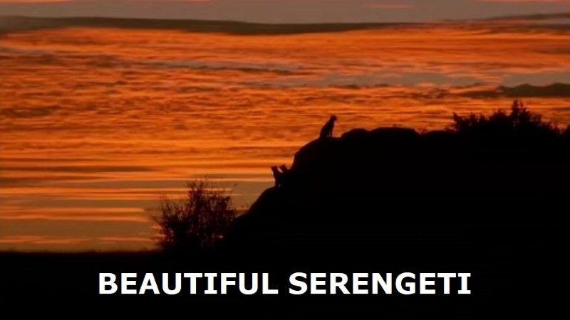 Beautiful Serengeti