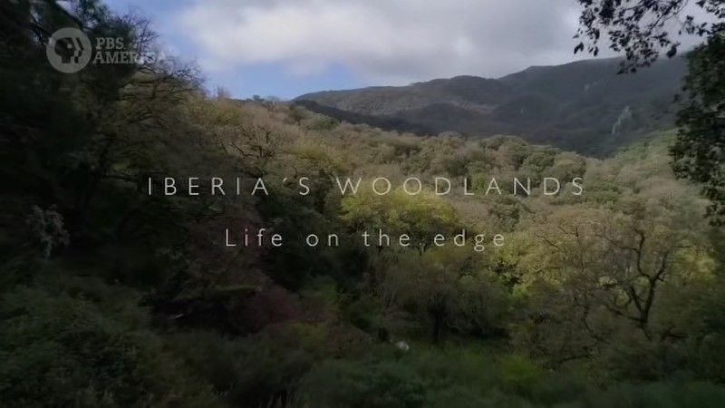 Iberia's Woodlands: Life on the Edge