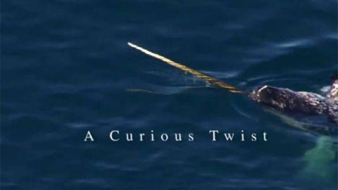 A Curious Twist