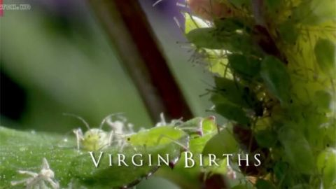 Virgin Births