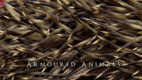 Armoured Animals